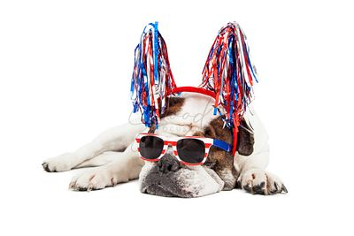 Funny Fourth of July Dog