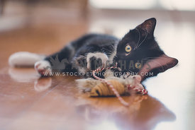 Kitten playing with toy on wooden floor