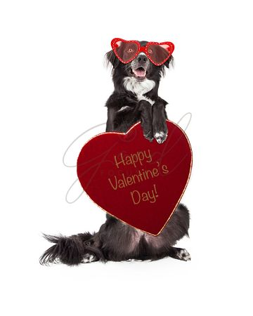 Funny Valentine Dog Holding Heart Candy Box