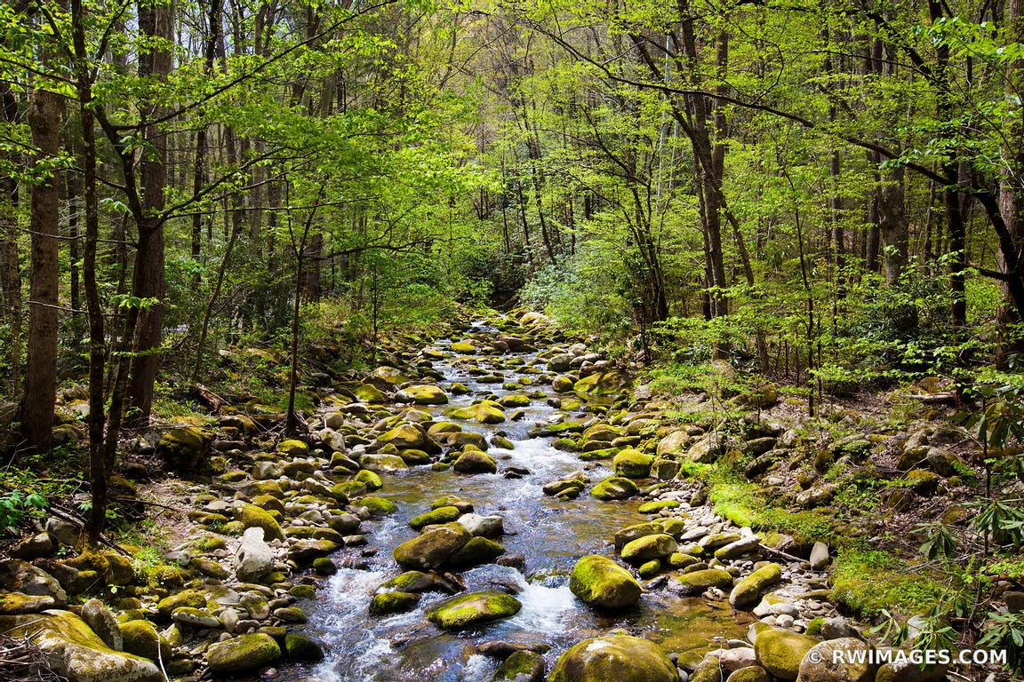 FOREST STREAM MOSSY STONES SMOKY MOUNTAINS NATIONAL PARK APPALACHIAN LANDSCAPE