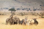 African Safari Animals in Dreamy Kenya Scene