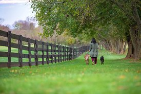 woman walking with two dogs on leash along fenceline in rural, rustic area