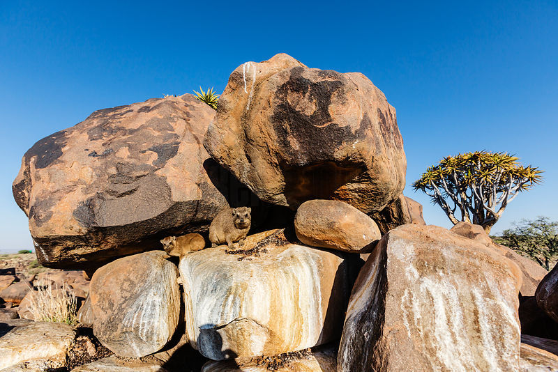 Rock Hyraxes and Granite Boulders