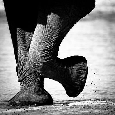9535-Legs_of_elephant_Laurent_Baheux