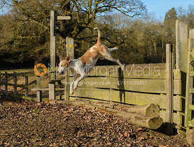Jumping a hunt jump in the first line