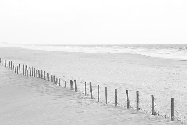 BEACH FENCE ASSATEAGUE NATIONAL SEASHORE MARYLAND BLACK AND WHITE