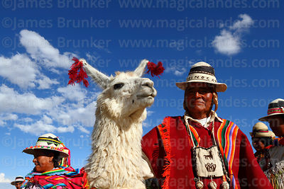 Camelid Fairs, Farming and Related Industries