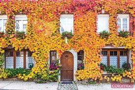 Typical house covered with vines, Champagne Ardenne, France
