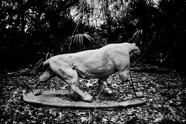 BROKEN BEAST CUMBERLAND ISLAND GEORGIA BLACK AND WHITE