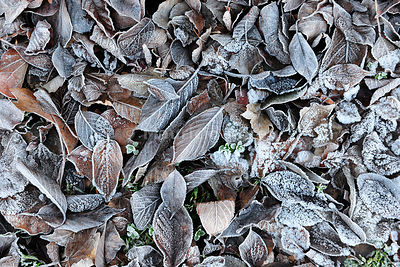 Leaves in Winter. Portugal