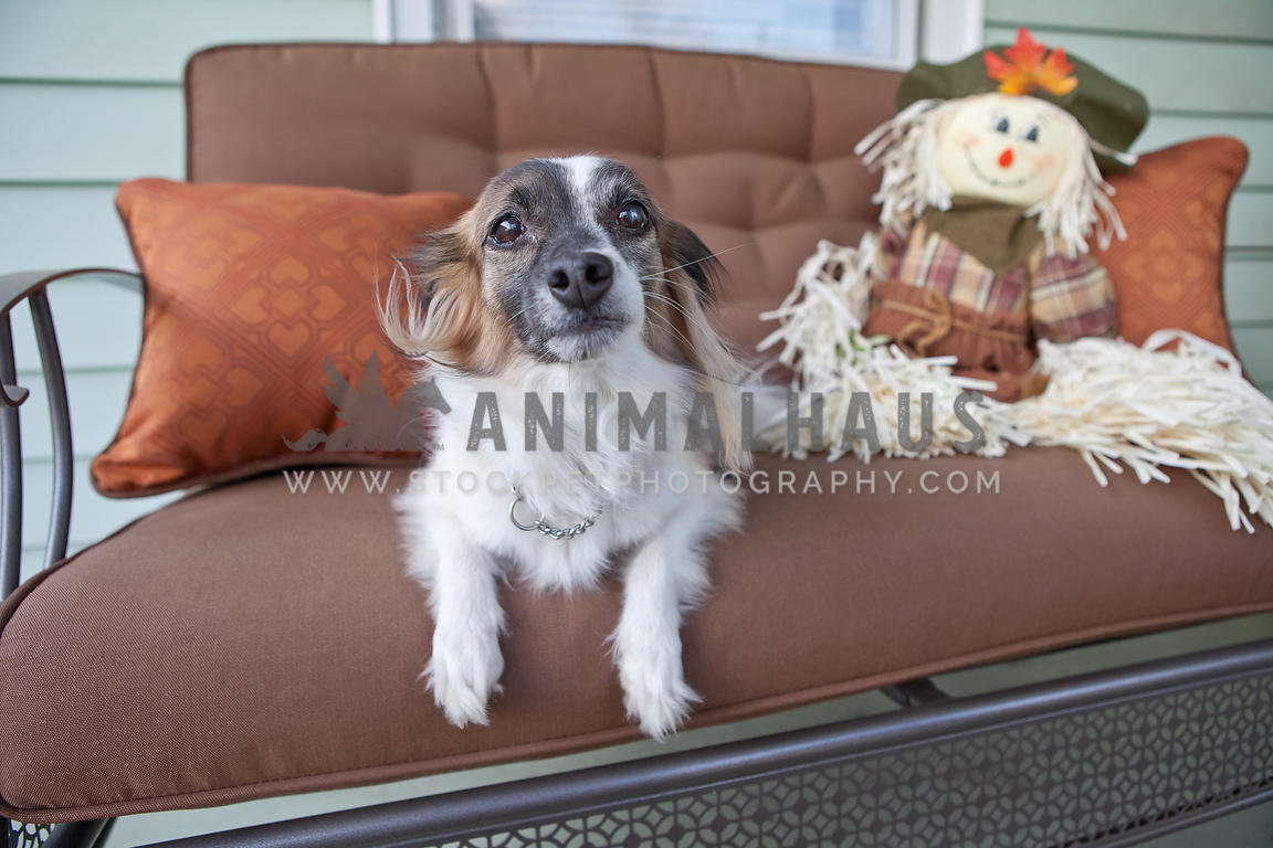 Fabulous Animalhaus Media Small Dog On Bench On Front Porch With Frankydiablos Diy Chair Ideas Frankydiabloscom