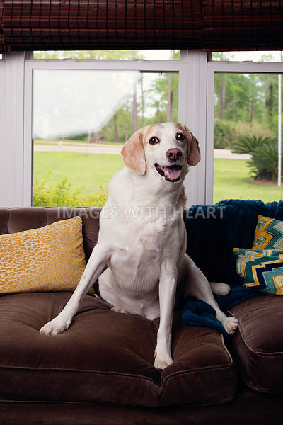 Dog on couch smiling at camera