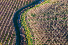 Walnut Orchards from the Air #5