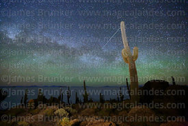 Echinopsis atacamensis (pasacana subspecies) cacti, Milky Way, shooting star and green airglow, Incahuasi Island, Salar de Uy...