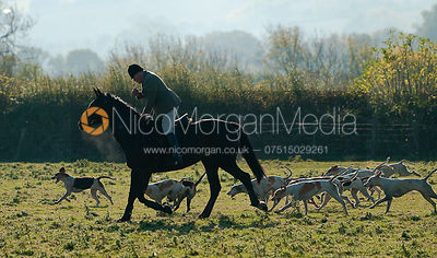 Neil Coleman and hounds