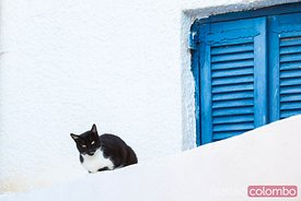 Black cat sitting near blue shutter window, Santorini, Greece