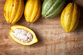 Fresh cocoa fruits laid on wooden background with an open fruit showing fresh cocoa seeds