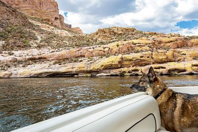 Dog Looking Out of Boat on Canyon Lake