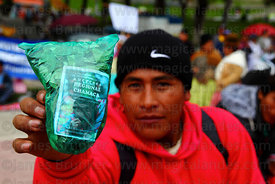 Coca grower with bag of coca leaves ( Erythroxylum coca ) at trade fair promoting products made from coca leaves , La Paz , B...