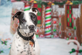 christmas themed dog portrait