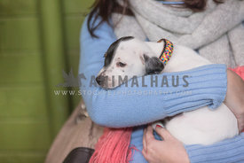 Puppy being held in woman's arms