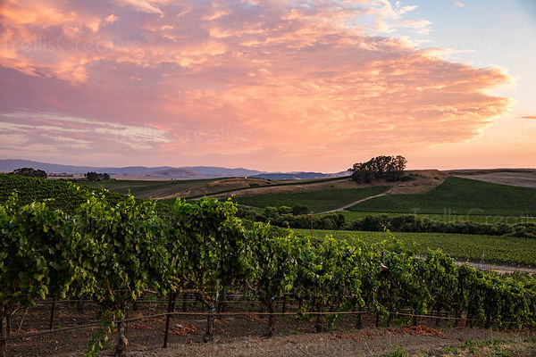 Colorful Napa Valley sunset with rolling hills
