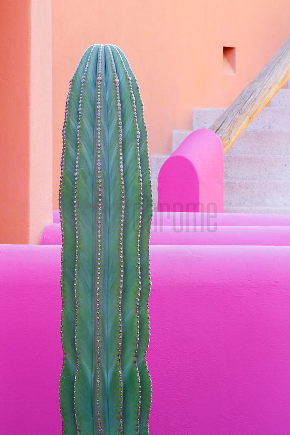 Cactus against colorful walls