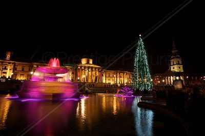 Christmas Tree in Trafalgar Square and  Fountain with Pink Lighting