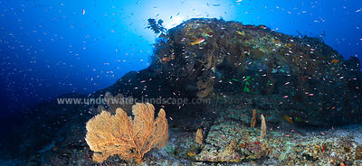 Underwater panoramic view