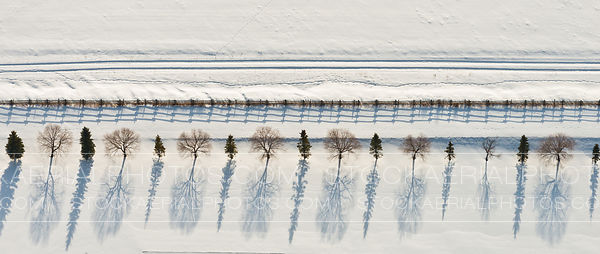 Trees in Winter Patterns