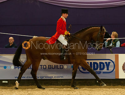 Topspec Show Hunter of the Year Championship - HOYS 2011