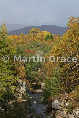 Glen Tromie mixed woodland in autumn, immediately below Tromie Bridge, Badenoch & Strathspey, Scottish Highlands