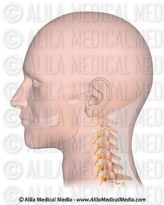 Cervical spine unlabeled