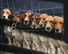 row of baset hounds from the front