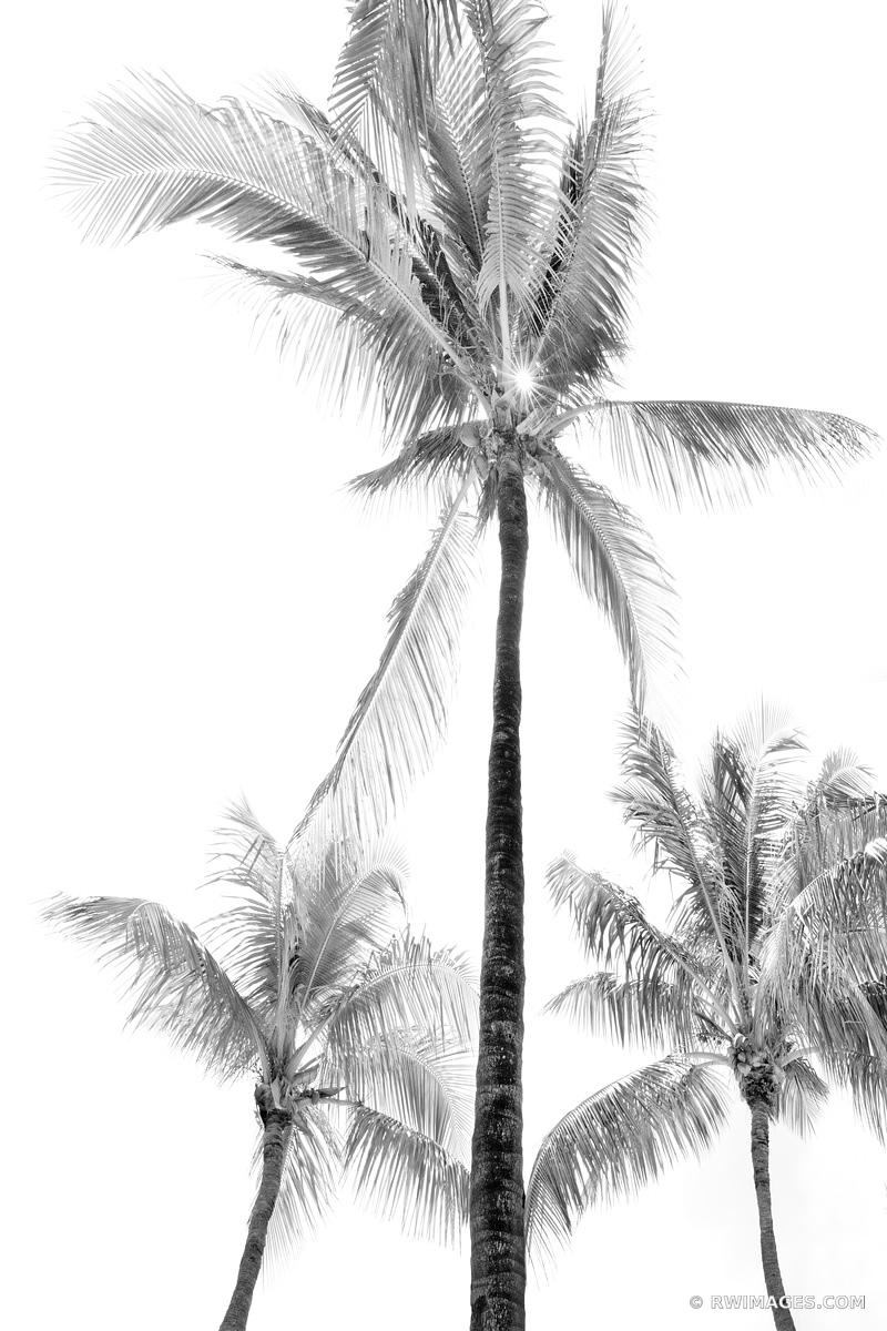 PALM TREES ISLAMORADA FLORIDA KEYS BLACK AND WHITE
