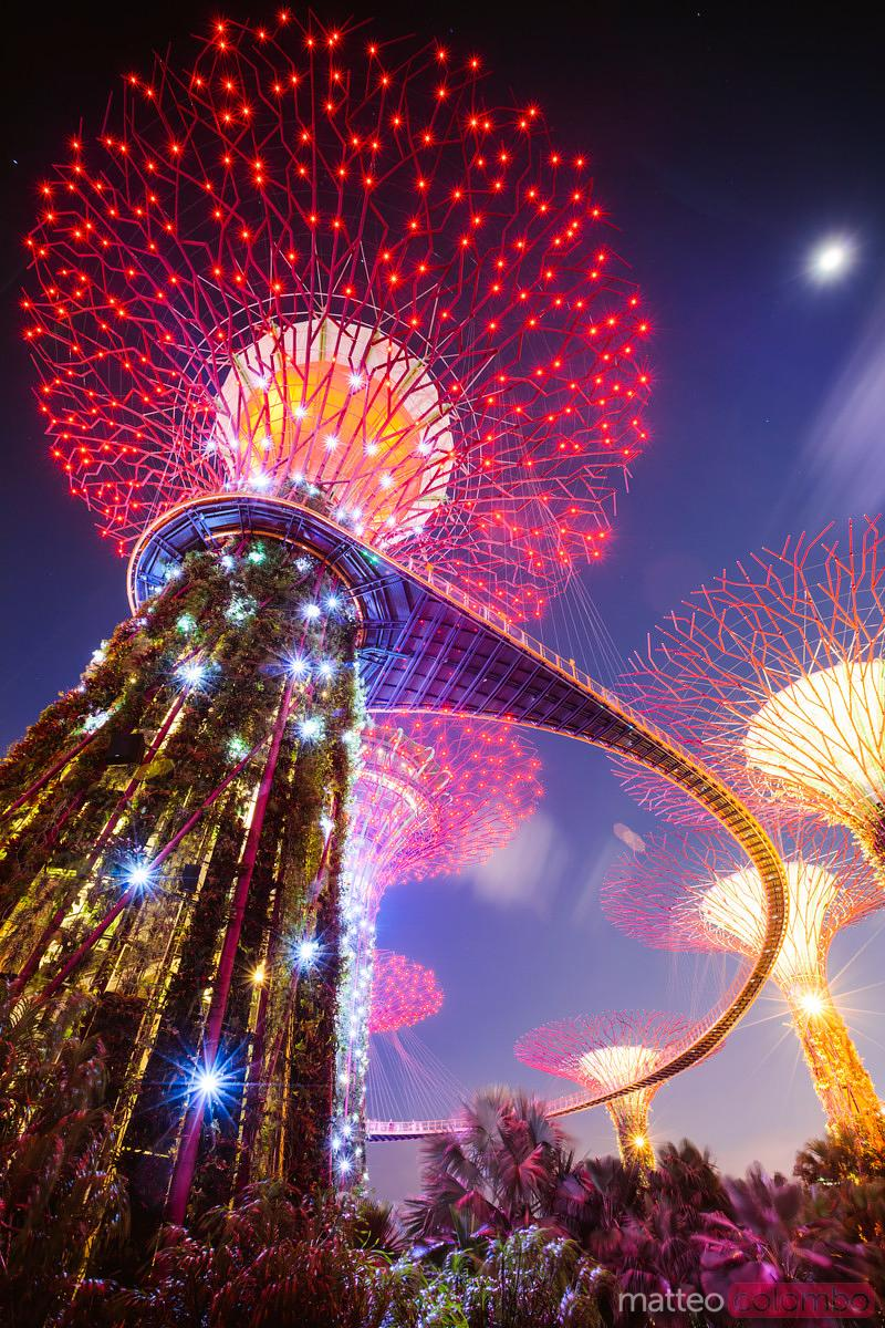 Matteo Colombo Travel Photography Supertree At Night Gardens By