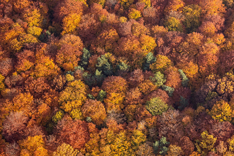 Aerial view of mixed forest canopy in autumn colors, Spessart, Germany, October 2015.