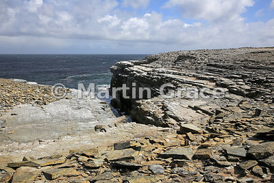 Cliff-top at West End, Sea Lion Island, Falkland Islands, with Southern Rockhopper Penguin colony (Eudyptes chrysocome chryso...