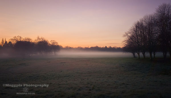 Misty Field at Dawn
