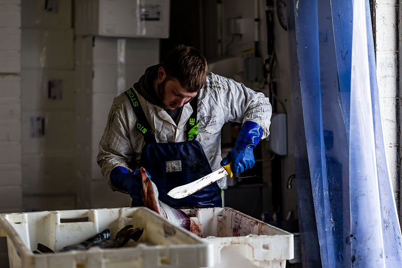 In the UK, 70% of the fish we eat is from just 5 species: Cod, Salmon, Prawns, Haddock and tuna. The UK actually catches over 40 species commercially but the majority of these – being less popular in the UK - are exported. Initiatives to increase consumption of less 'well-loved' sustainable UK-landed fish aim to give UK fishers a better deal