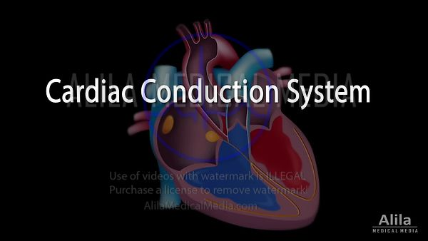 Cardiac conduction system and ECG anatomy NARRATED video.