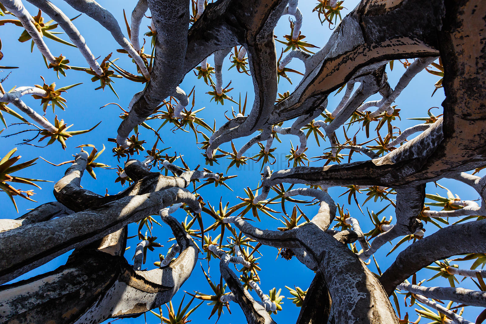 Looking Up Through the Branches of a Quiver Tree