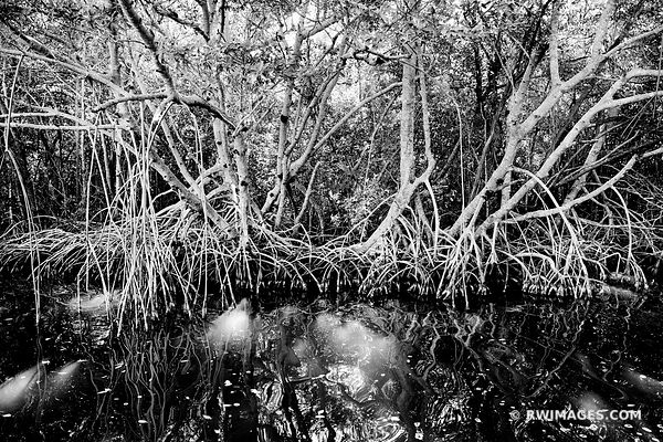 Everglades Florida - Black and White Photos