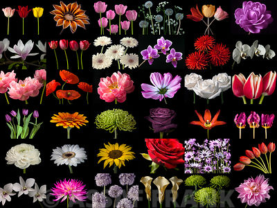 Collage of multicolored flowers