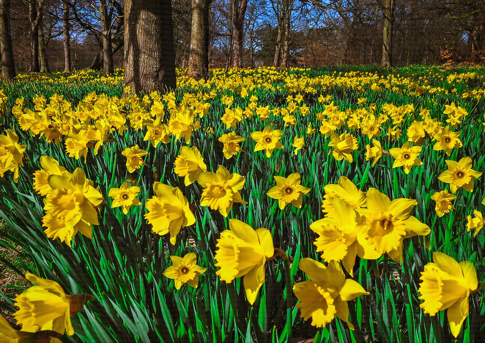 Marie Curie Field of Hope, Sefton Park