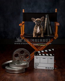 French Bulldog Puppy with movie props sitting in chair