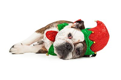 Tired Christmas Elf Dog