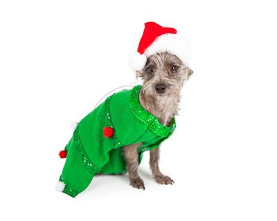 Scruffy Dog Dressed As Christmas Tree