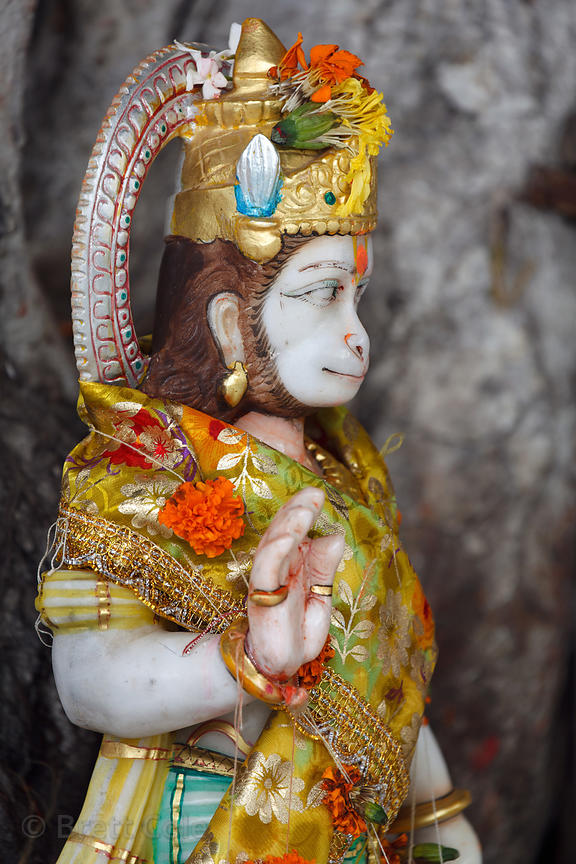 Decorated idol of Hanuman in the nook of a tree, Colaba, Mumbai, India.