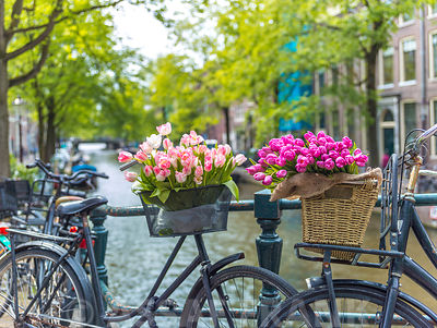 Bicycle with bunch of flowers by the canal, Amsterdam